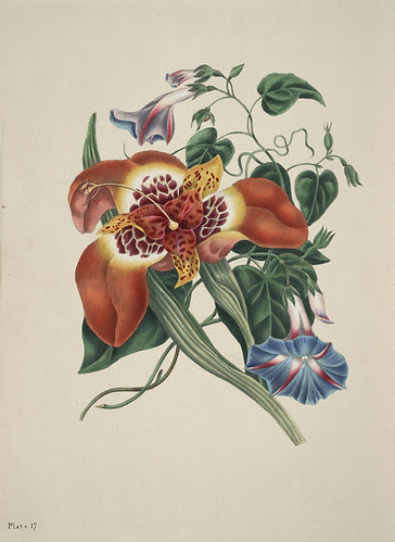 The beauties of flora - Eliza Eve Gleadall  (1834) a