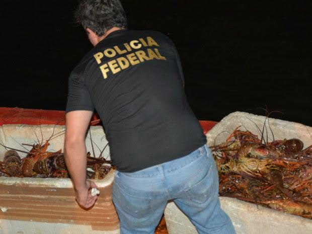 Lagostas foram apreendidas em fiscalização de rotina da PF. (Foto: Divulgação / Polícia Federal)