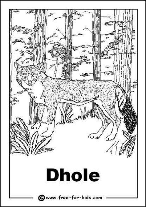 endangered animals colouring pages