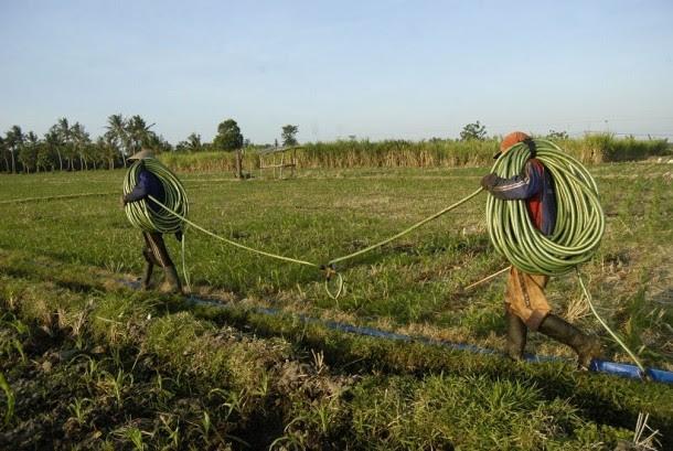 Dua buruh semprot membawa selang untuk menyemprot pupuk cair di Desa Semiring, Mangaran, Situbondo, Jawa Timur, Minggu (17/7).