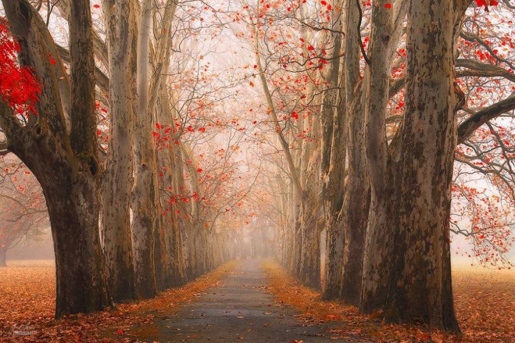 Os bosques outonais oníricos de um fotógrafo tcheco 04