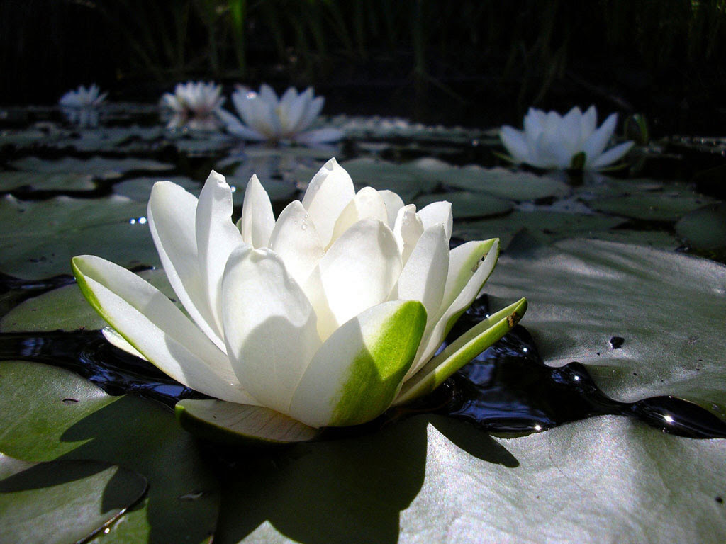 Feliz Primavera La Flor De Loto Espacio Yoga