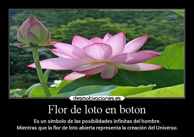 Flor De Loto En Boton Desmotivaciones