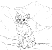 710 Top Free Printable Coloring Pages Of Desert Animals  Images