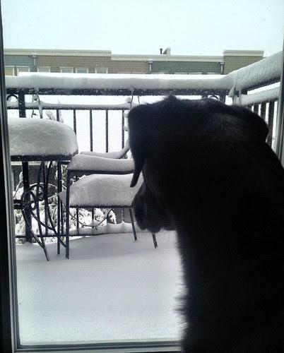 Snowflake watching.
