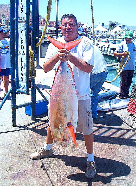 Το σπάνιο ψάρι luvarus imperialis αφορμή για μία παράξενη ιστορία...