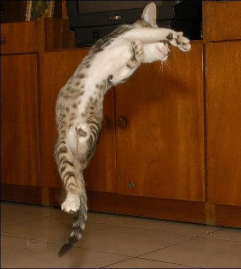 funny_cats_77 (487x542, 74Kb)