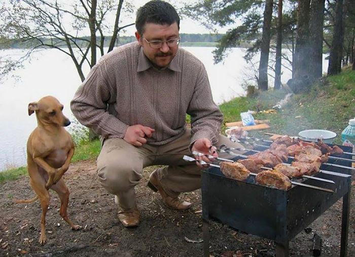 Dobby veut de la nourriture mais Dobby est un bon boi alors il ne fait pas Bork
