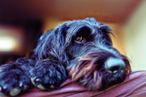 Your Whining Dog Is Sending You A Message, Here's How To Decode It