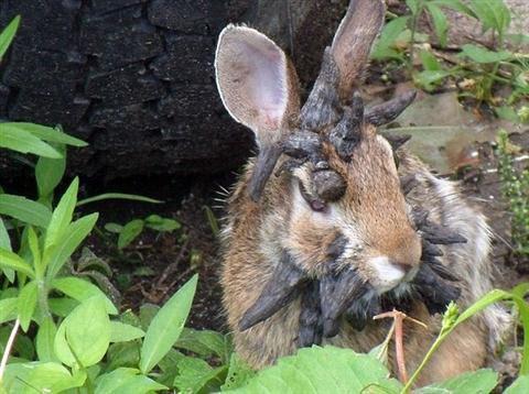thỏ, mọc sừng, khắp đầu, yêu quái, kỳ dị, khối u