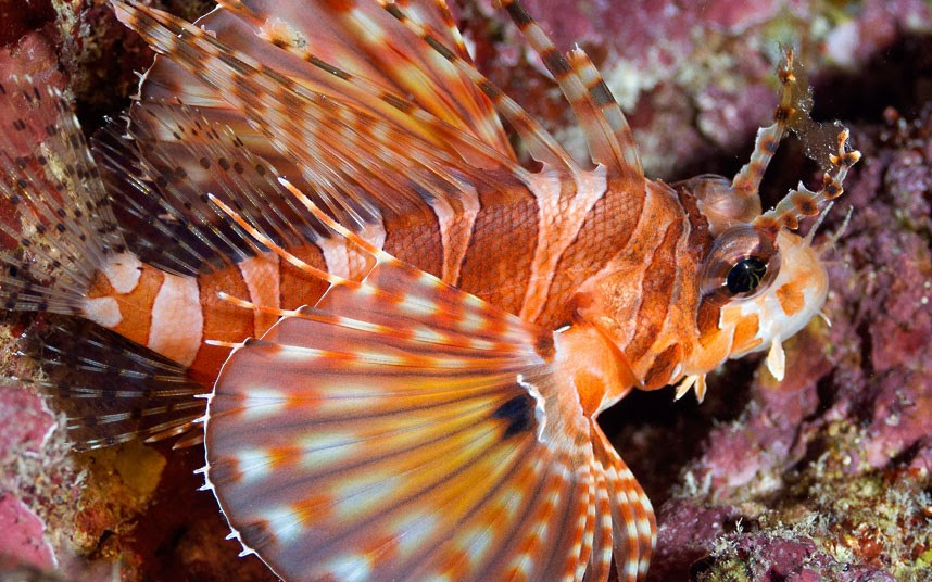 Parakseno.gr : coral 11 Ο μαγικός κόσμος του μεγάλου κοραλλιογενούς υφάλου