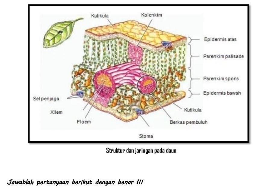 Perbedaan Struktur Akar Monokotil Dan Dikotil Brainly ...