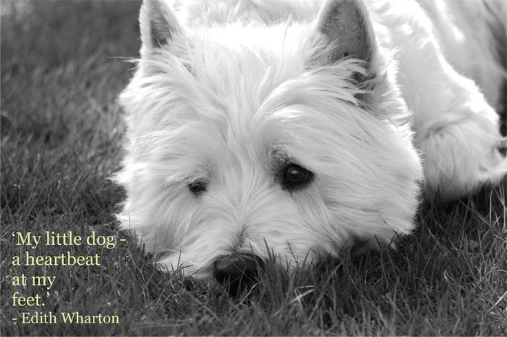 My Little Dog A Heartbeat At My Feet Quotespicturescom