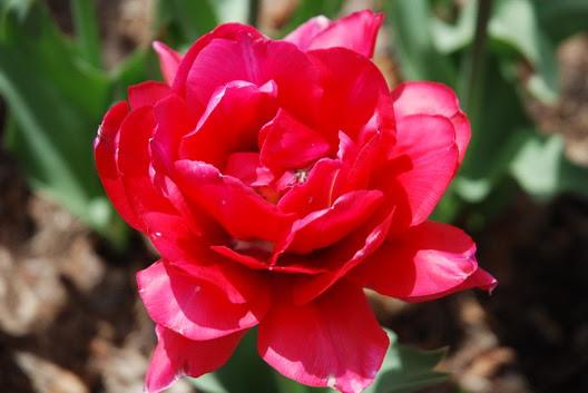 BBG Flower
