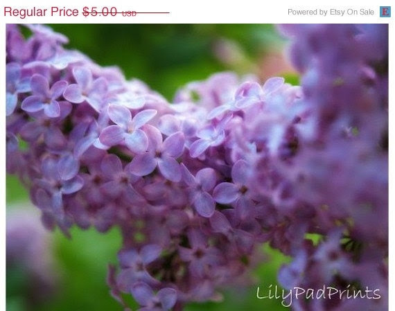 Mothers Day Sale Lavender lilacs blank photo note card by lilypadprints on etsy