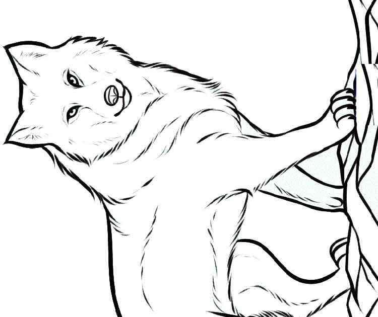 ausmalbilder zum ausdrucken tiere wolf  wolf malvorlage
