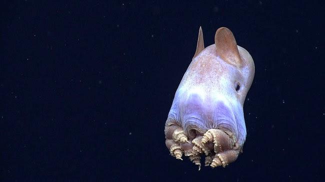 Lautan yang luasnya dua per tiga bumi diperkirakan ialah daerah dimana  kehidupan di bumi Hewan-Hewan Laut yang Unik