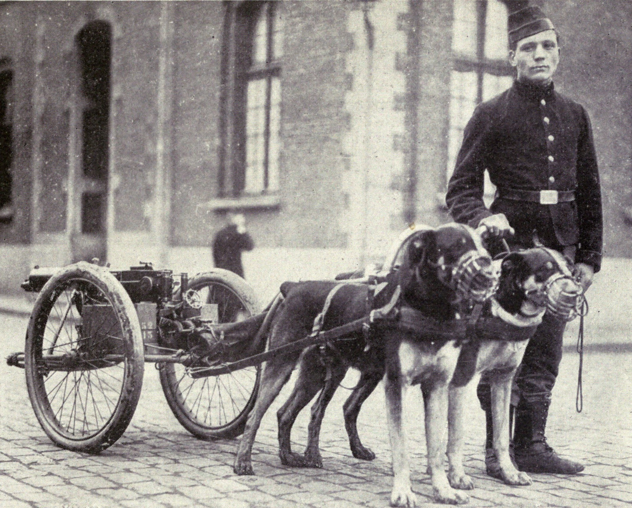 http://upload.wikimedia.org/wikipedia/commons/0/09/Belgian_dogs_trained_to_draw_quick-firing_guns.JPG