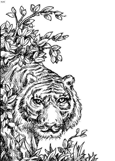 images  wild animals coloring pages