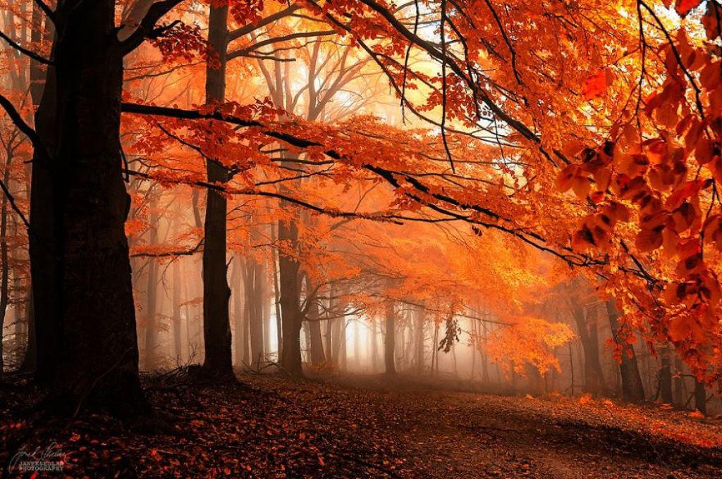 Os bosques outonais oníricos de um fotógrafo tcheco 03