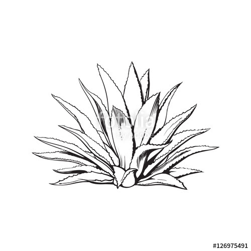 cactus line drawing 13
