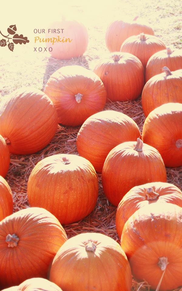 pumpkin love xo
