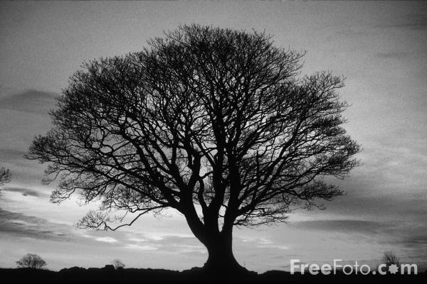 Black And White Images Trees
