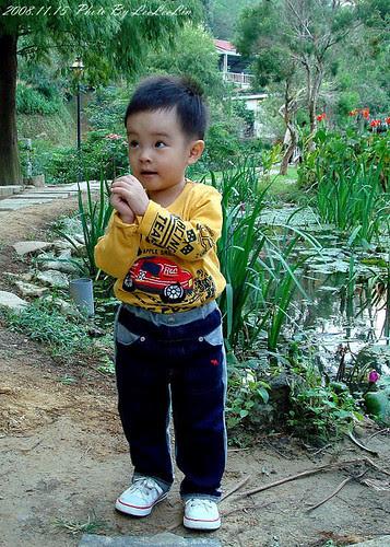 金谷農場|餵魚趣、柿染活動|新竹新埔親子遊
