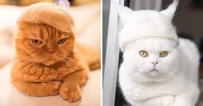 """Estas 13 fotos mostram gatos usando """"chapéus"""" feitos de seus próprios pelos"""