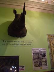 durban natural history museum - foyer1