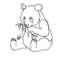 Dibujos Para Colorear Oso Panda Em El Bosque Eshellokidscom