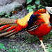 10 Of The Most Colourful Animals In Lifestyles