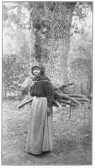 Photo of a Wood Gatherer
