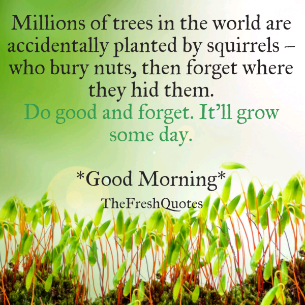 Hd Good Morning Quote 9737 Hdwpro