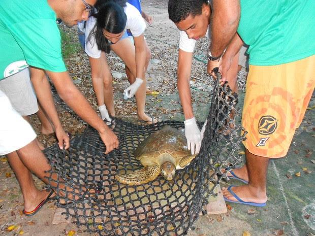 Equipe do Instituto Biota promoveu soltura do animal (Foto: Bruno Stefanis/Instituto Biota)
