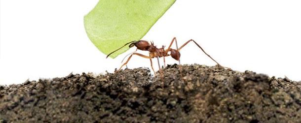 Karıncadaki Kültür Kodları