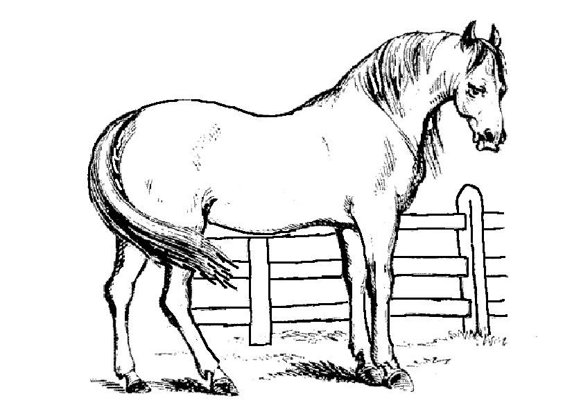 Malvorlagen Pferde 4 Gratis Malvorlagen