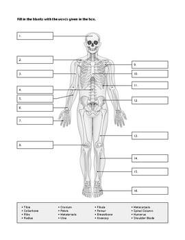 31 Skeletal System Worksheet High School   Worksheet ...