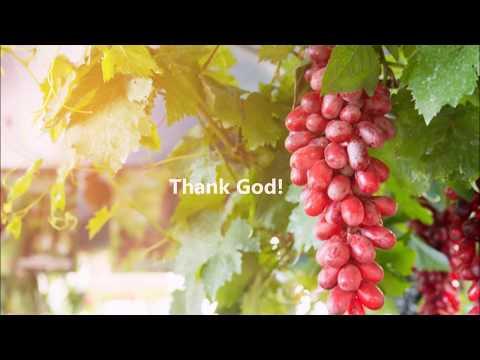 Chúa là cây nho - L.m Ân Đức - Ca sỹ Lý Mai Trang
