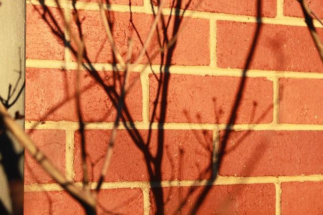 Lilac shadows on red brick