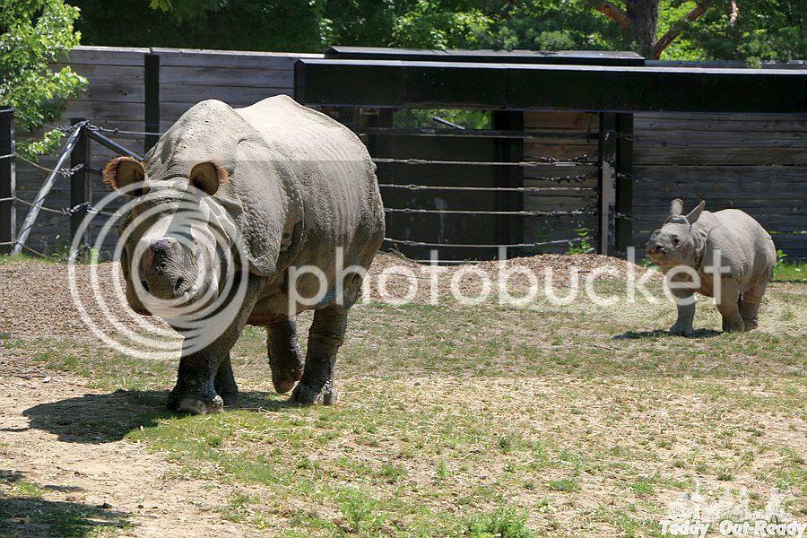 Rhino Toronto Zoo