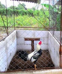 276+ Gambar Desain Kandang Ayam Filipina Kekinian