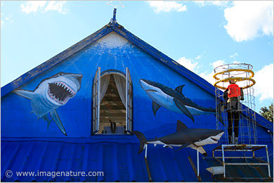 Shark watching – adventure cage diving