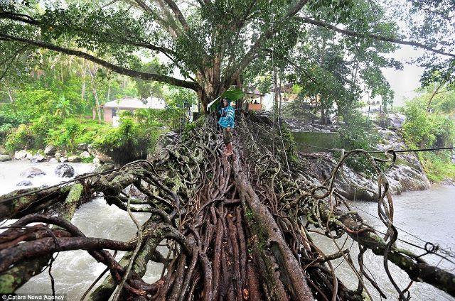 جسر الشجرة