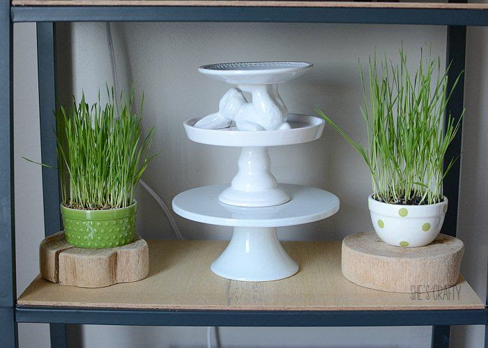 wheat grass, bunny pedestal