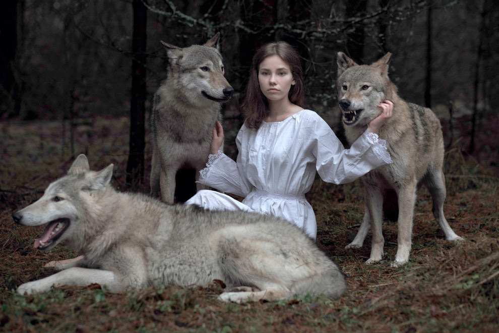 Казкові фотографія з вовками