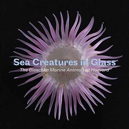 Sea Creatures In Glass The Blaschka Marine Animals At Harvard English And German Edition