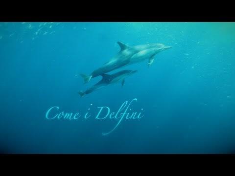 """Intervista: Iravox torna con il nuovo singolo 'Come i delfini'. I talent? ''La fine della musica d'autore"""""""