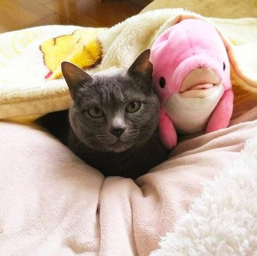 Hima, una gatita que demostró en un adorable video todo el amor que pueden brindar los gatos
