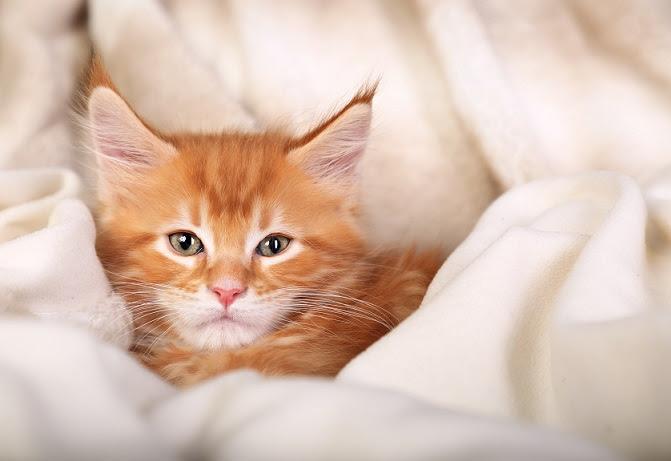Katzenbilder Gratis